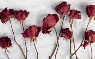 9 способов засушить цветы, сохранив их форму и яркий цвет лепестков