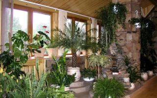 Мои простые способы обеззараживания грунта для комнатных растений