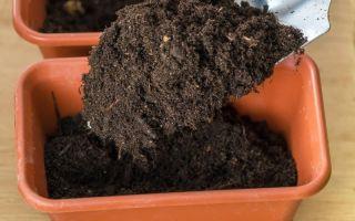 Стерилизация земли в печке: простой способ обезопасить растения от вредителей