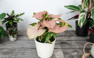 Цветочные тренды: какими растениями модно украшать светлые интерьеры