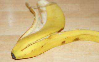 Комнатные растения любят бананы, но если просто закопать фрукт в землю, то цветок погибнет
