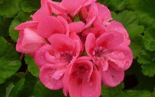 8 домашних растений, которые могут предсказывать погоду
