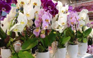 Горшки для орхидей: как выбрать правильно?