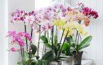 Почему листья орхидеи стали серыми – 3 распространенные причины