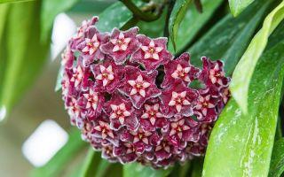 6 комнатных растений, которые спокойно переносят засуху