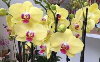 5 сортов орхидей, цветы которых похожи на ярких экзотических бабочек
