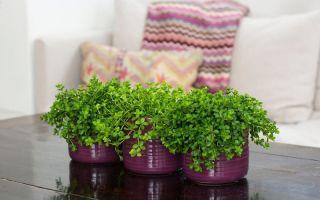 6 безопасных гипоаллергенных растений, которые можно держать даже в детской