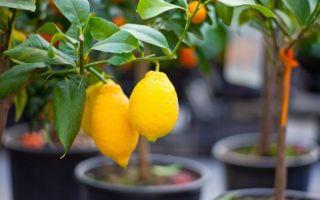 15 самых безопасных и полезных растений для детской комнаты