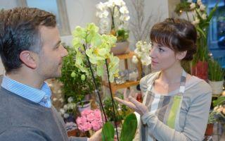 Как выбрать здоровую орхидею
