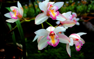 Орхидея отцвела: что делать, чтобы новые цветки появились как можно раньше