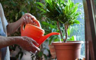 Пережить жару: 6 советов по уходу за комнатными растениями летом