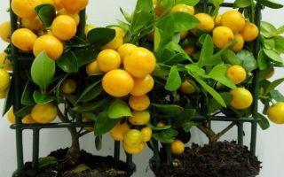 5 растений, которые считаются очень полезными для детской комнаты