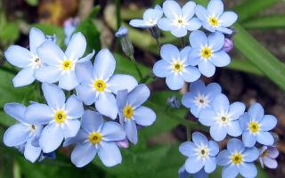 Цветы, которые нужно посадить на рассаду уже в феврале