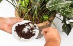 5 эффективных подкормок для домашних растений без химии