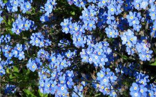 Лесные цветы в вашем саду: какие посадить и как ухаживать, чтобы они не один год радовали глаз