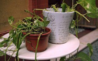 5 способов оживить зачахшее комнатное растение