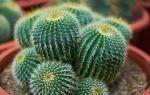 А по ним и не скажешь: 4 домашних растения, которые мешают наладить личную жизнь