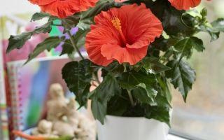 Любоваться, не трогая: 7 комнатных растений, не менее колючих, чем кактусы