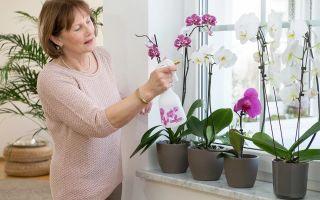 5 мифов об орхидеях, в которые не нужно верить, если вам нравится этот цветок
