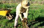 Основные правила удобрения растений, которые должен знать каждый садовод