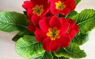 Если чихаете и чешетесь: возможно, причина в аллергии на 7 комнатных растений