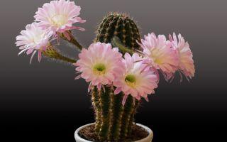 5 примет, которые связаны с кактусами