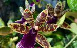 5 орхидей с ярким медовым запахом, который чувствуется издалека