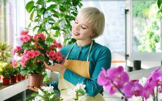 Простой лайфхак: как с помощью льда продлить жизнь комнатным растениям