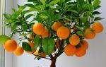 8 растений для дома, которые легко вырастит из косточки даже начинающий цветовод