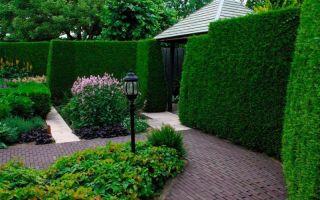 7 причин устроить живую изгородь у себя на участке