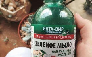 Рецепт самодельного садового мыла, подходящего для обработки комнатных растений