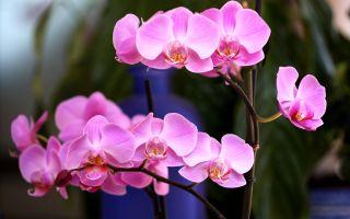 5 лайфхаков, с которыми ваша орхидея наконец зацветет