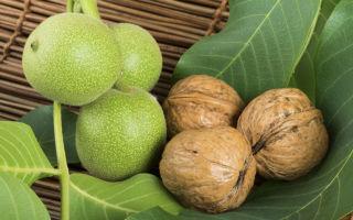Дерево-разрушитель: почему нельзя сажать грецкий орех возле дома