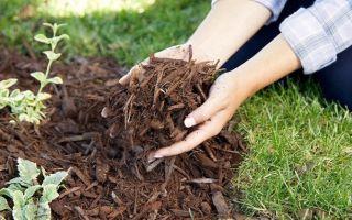 Не губите огород: 5 вариантов мульчи, которая может быть опасна для ваших растений