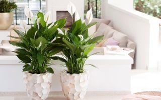 Создаем гармонию в доме: 5 цветов, которые желательно выращивать в спальне