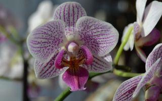 4 причины пересадить орхидею сразу же после покупки
