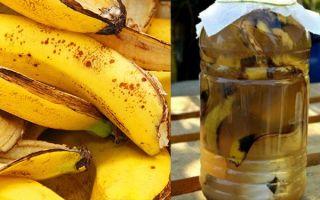 Удобрения из банановой кожуры: решение для комнатных растений