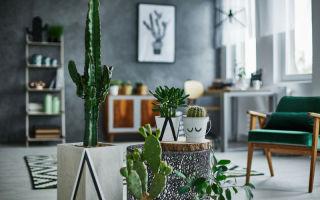 5 интересных фактов для всех владельцев кактусов