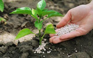4 действенных способа подкислить почву в огороде, и зачем вообще это делать