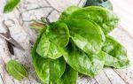 Не только для еды: 4 весомые причины посадить щавель на даче