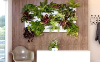 6 способов оживить интерьер при помощи комнатных растений