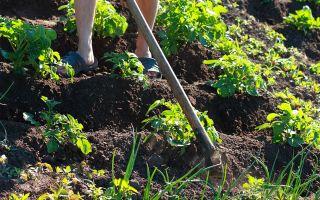Почему не стоит перекапывать землю: 5 преимуществ безотвальной обработки почвы