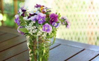 Как с помощью цветов наладить отношения в семье