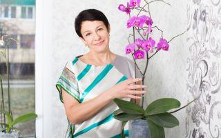 Почему корни орхидеи «выпрыгивают» из горшка и что с этим делать