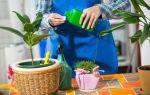 Как правильно подкармливать комнатные растения, чтобы не обжечь корни и листья