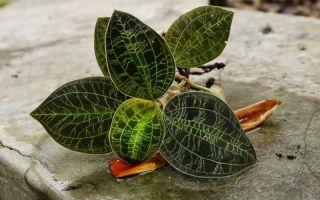5 комнатных растений с необычными узорами на листьях