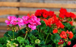 7 неприхотливых комнатных растений для тех, у кого мало свободного времени