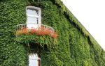 5 причин хорошо подумать, прежде чем украшать дом вьющимися растениями