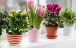 Растения: выращиваем правильно