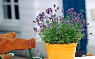 5 растений, которые хорошо смотрятся не только в саду, но и дома на подоконнике
